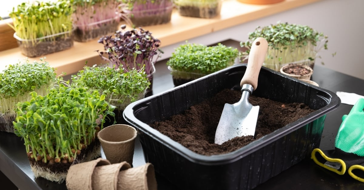 soil and plant nutrition