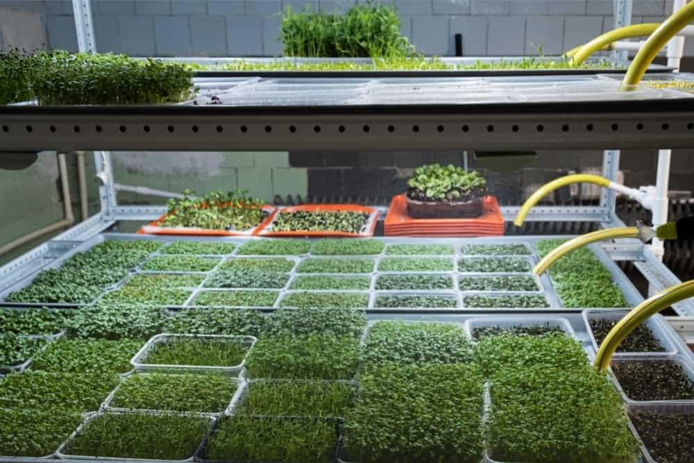 City Farm for Growing Microgreens. Eco-Friendly Small Busi