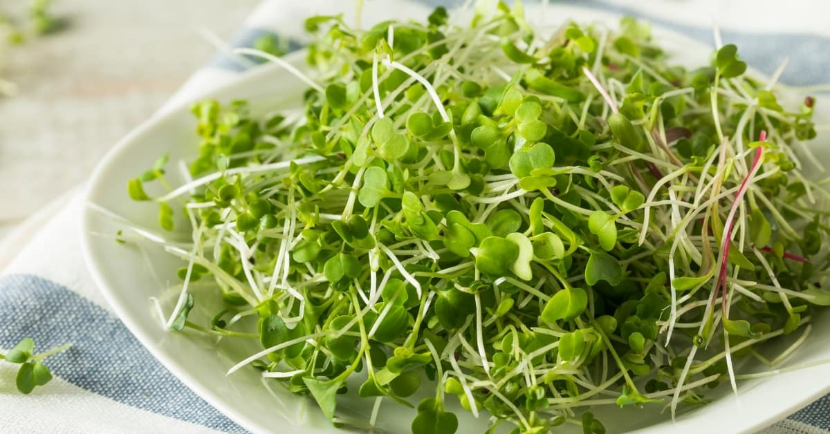 Eating Microgreens Raw