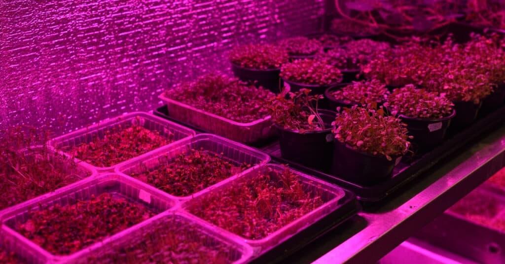 Indoor microgreens farm