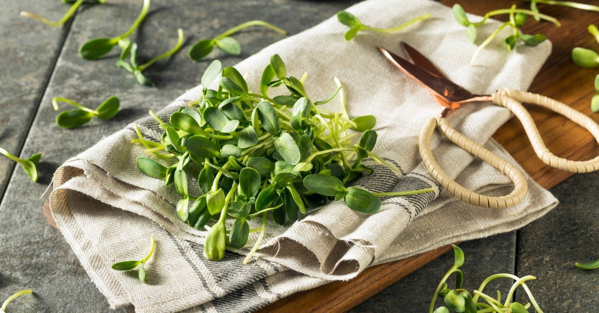 why are microgreens falling over