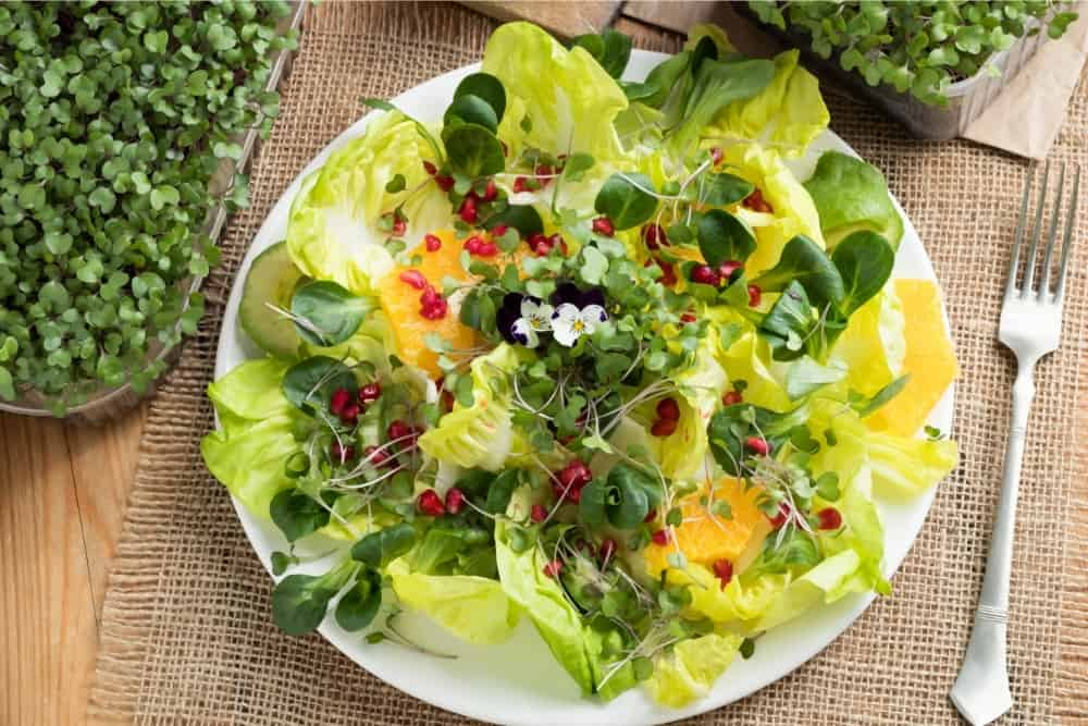 Vegetable salad with fresh kale and broccoli microgreens, lettuce