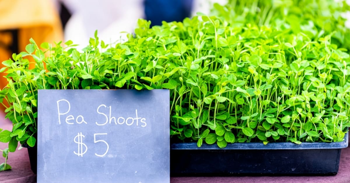 why are microgreens so expensive