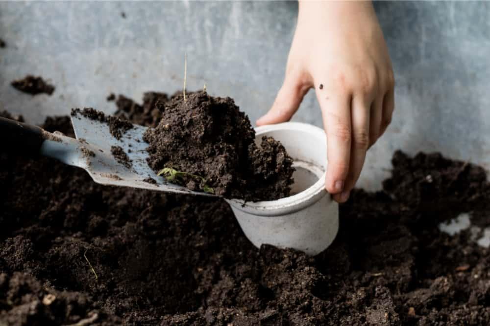 can you reuse microgreen soil